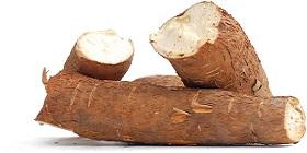 cassava-280x140.jpg