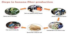 Producing-Banana-Fiber-280x140