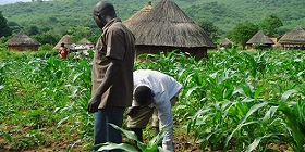 youth-farming-280x140.jpg